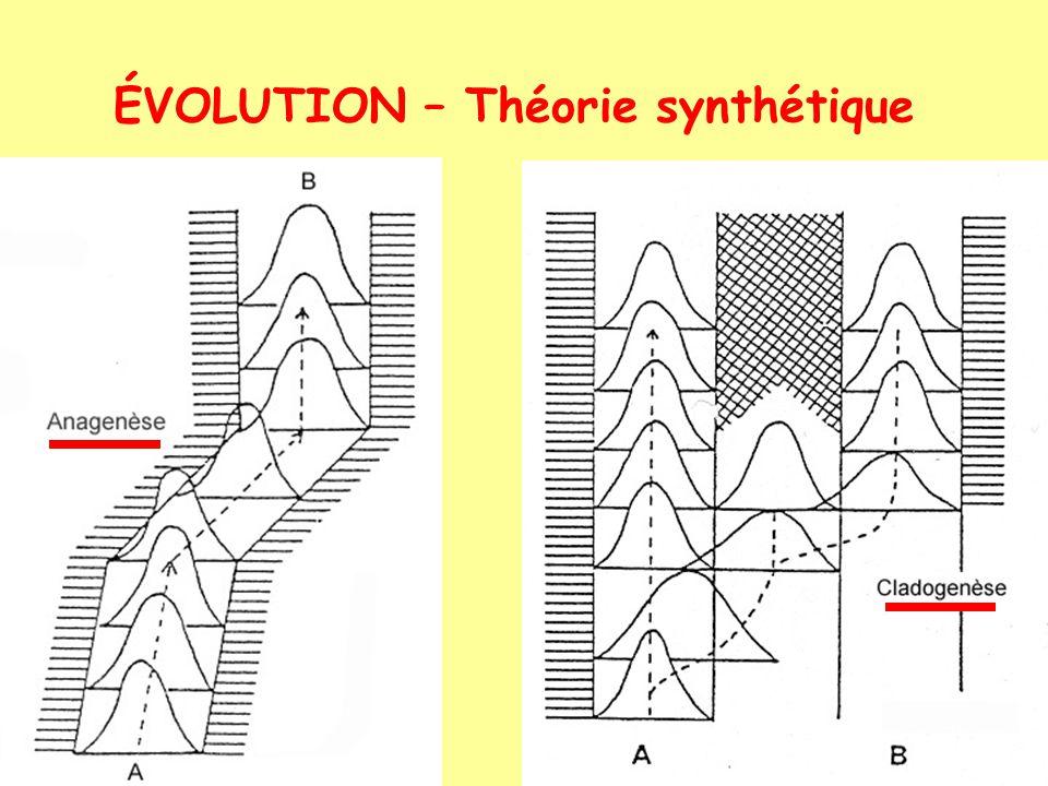 ÉVOLUTION – Théorie des équilibres ponctués (bottleneck) (ponctualisme) isolats