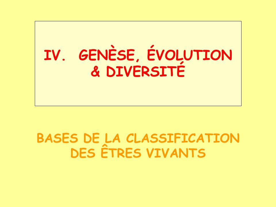 Classification du vivant Biosphère: ~ 1.750.000 espèces mais: bcp non décrites (plusieurs 10 6 ??) Regroupement utilité milieu occupé ressemblance Aristote (-384/-312) reconnaît: des plans dorganisation communs des catégories de + en + restrictives