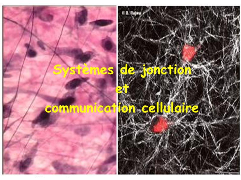 Systèmes de jonction et communication cellulaire