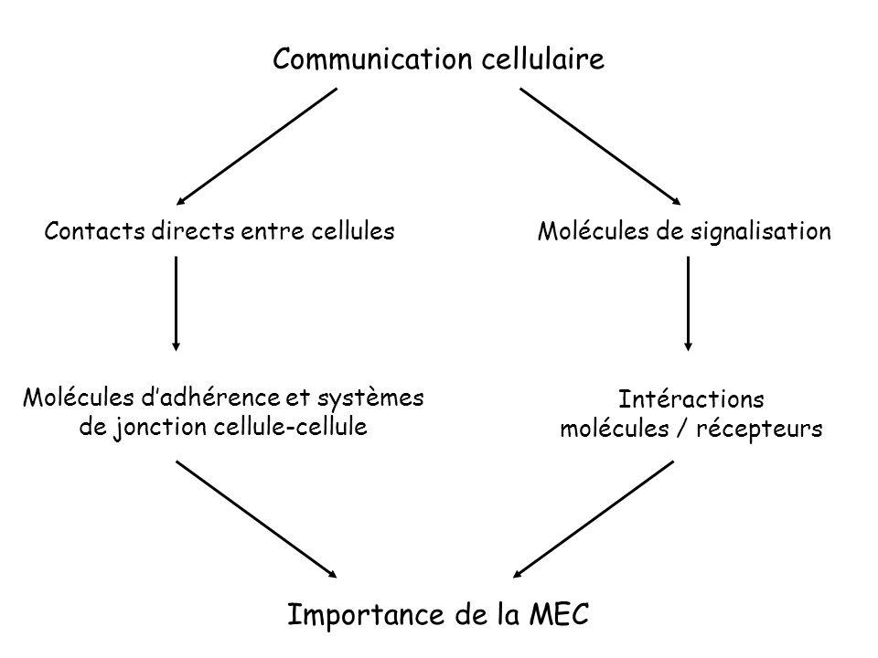 Communication cellulaire Contacts directs entre cellulesMolécules de signalisation Molécules dadhérence et systèmes de jonction cellule-cellule Intéra