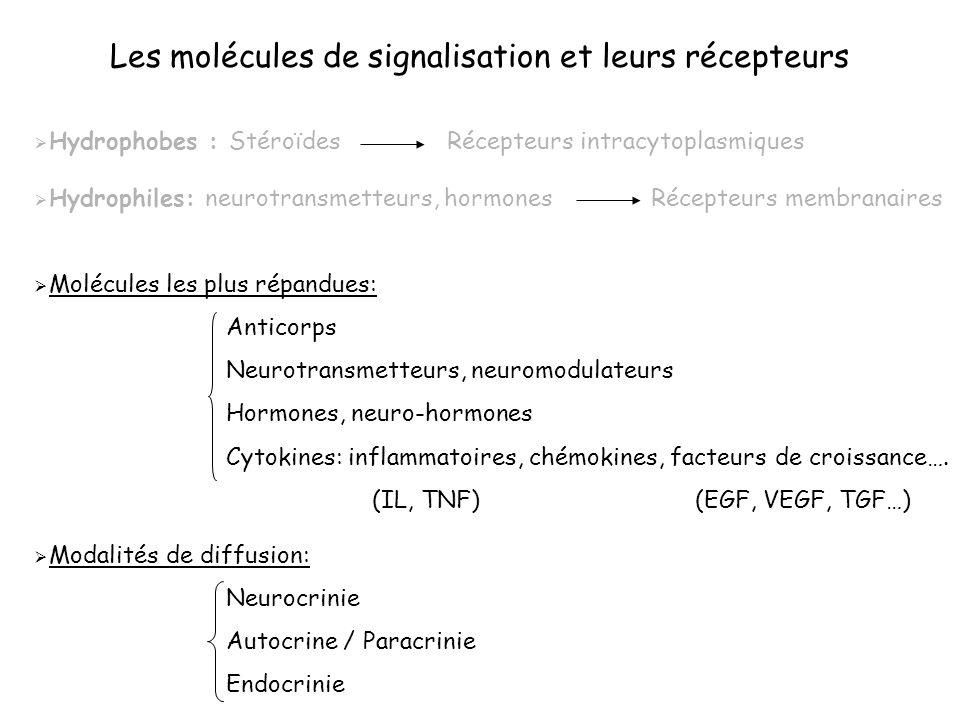 Les molécules de signalisation et leurs récepteurs Hydrophobes : Stéroïdes Récepteurs intracytoplasmiques Hydrophiles: neurotransmetteurs, hormones Ré