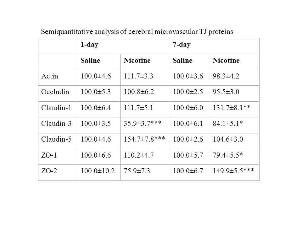 Semiquantitative analysis of cerebral microvascular TJ proteins 1-day7-day SalineNicotineSalineNicotine Actin100.0±4.6111.7±3.3100.0±3.698.3±4.2 Occlu