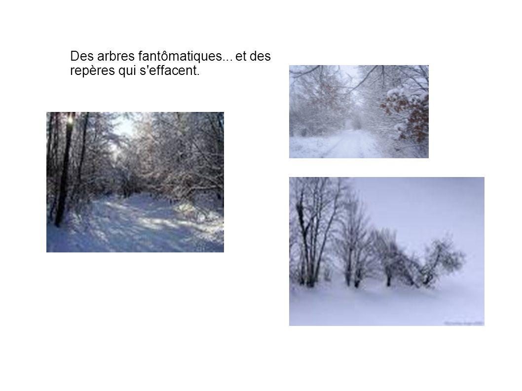 Des arbres fantômatiques... et des repères qui s effacent.