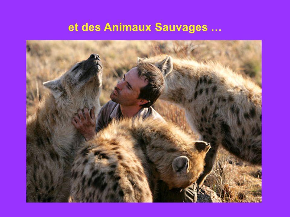et des Animaux Sauvages …