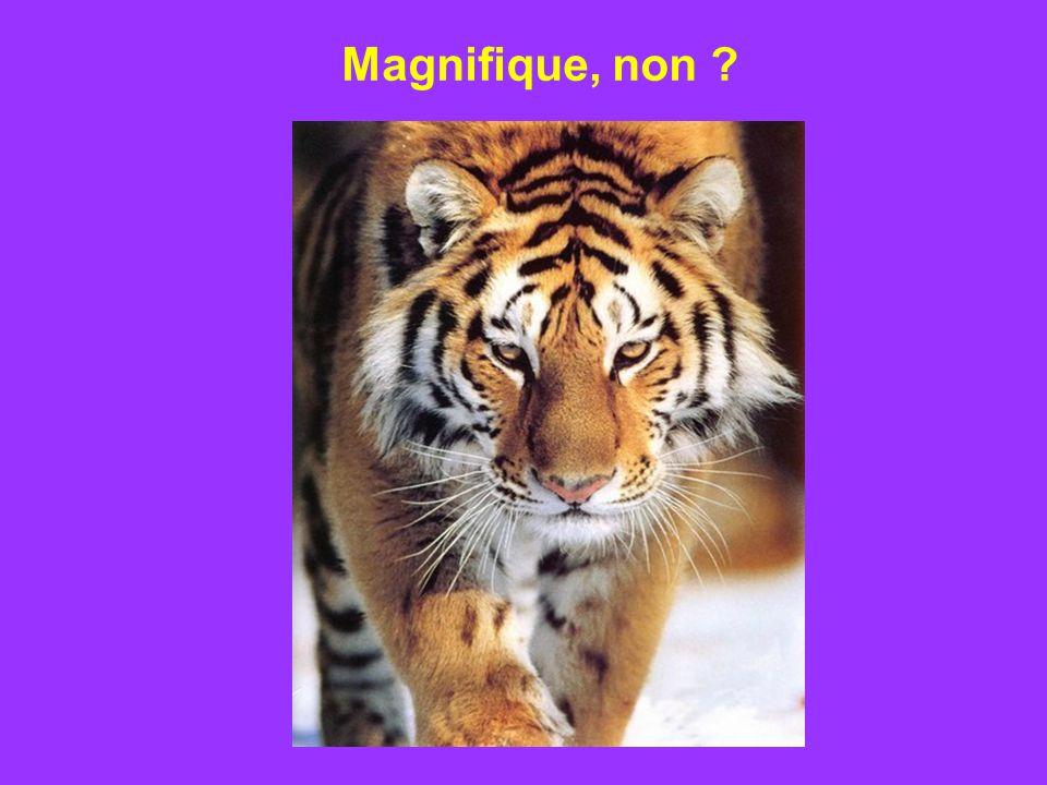 Magnifique, non