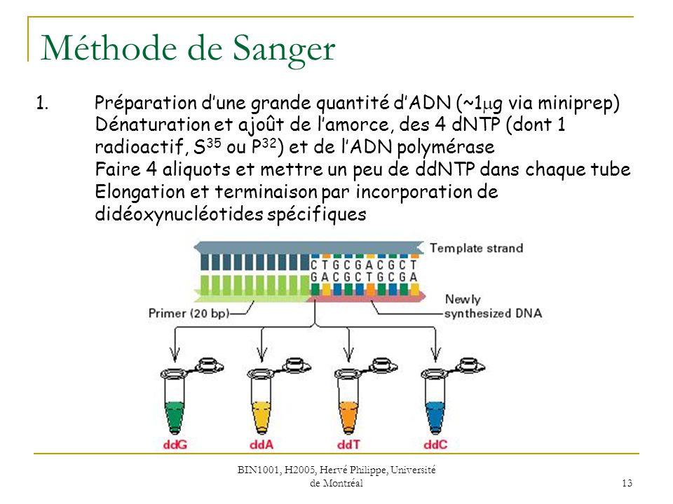 BIN1001, H2005, Hervé Philippe, Université de Montréal 13 Méthode de Sanger 1.Préparation dune grande quantité dADN (~1 g via miniprep) Dénaturation e