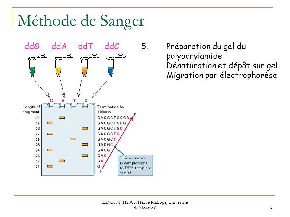 BIN1001, H2005, Hervé Philippe, Université de Montréal 14 Méthode de Sanger 5.Préparation du gel du polyacrylamide Dénaturation et dépôt sur gel Migra