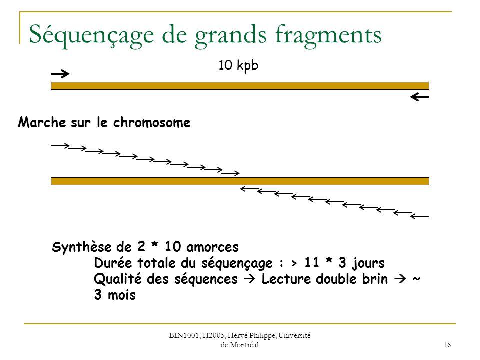 BIN1001, H2005, Hervé Philippe, Université de Montréal 17 Séquençage de grands fragments Sous-clonage 10 kpb ~ 5 enzymes de restriction à 6 nucléotides (HindIII, EcoRI, BamHI, PstI, SmaI) Carte de restriction pour décider quelles enzymes retenir Sous-clonage avec BamHI des 8 fragments BamHIPstIBamHISmaIBamHIPstIBamHISmaIBamHI SmaIEcoRIBamHI Durée totale du séquençage : ~ 5 * 3 jours