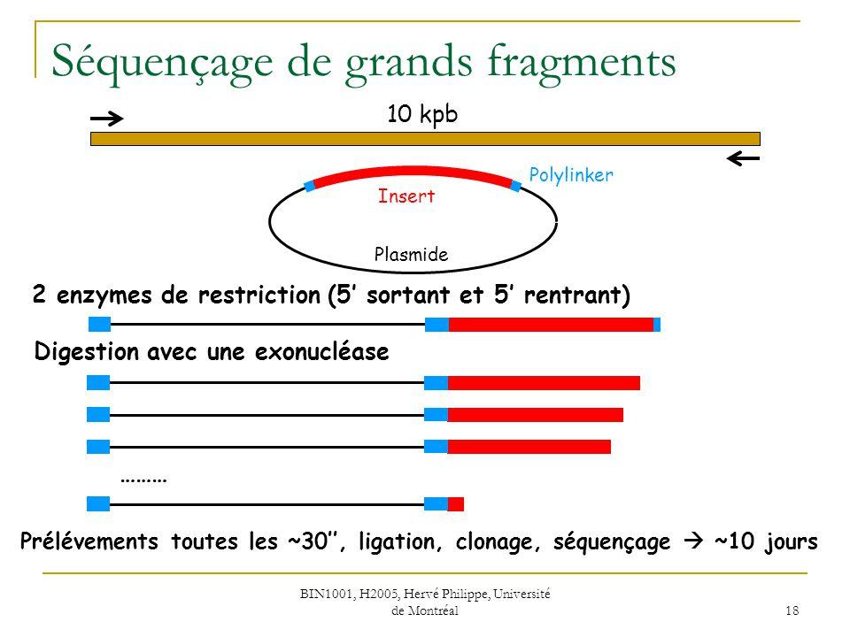 BIN1001, H2005, Hervé Philippe, Université de Montréal 18 Séquençage de grands fragments Digestion avec une exonucléase 10 kpb 2 enzymes de restrictio