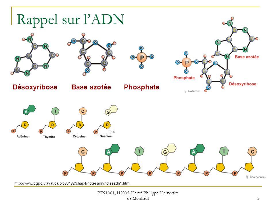 BIN1001, H2005, Hervé Philippe, Université de Montréal 3 Enzymes de restriction http://www.dil.univ-mrs.fr/~vancan/optionBio1/documents/1ercours2003_4.pdf