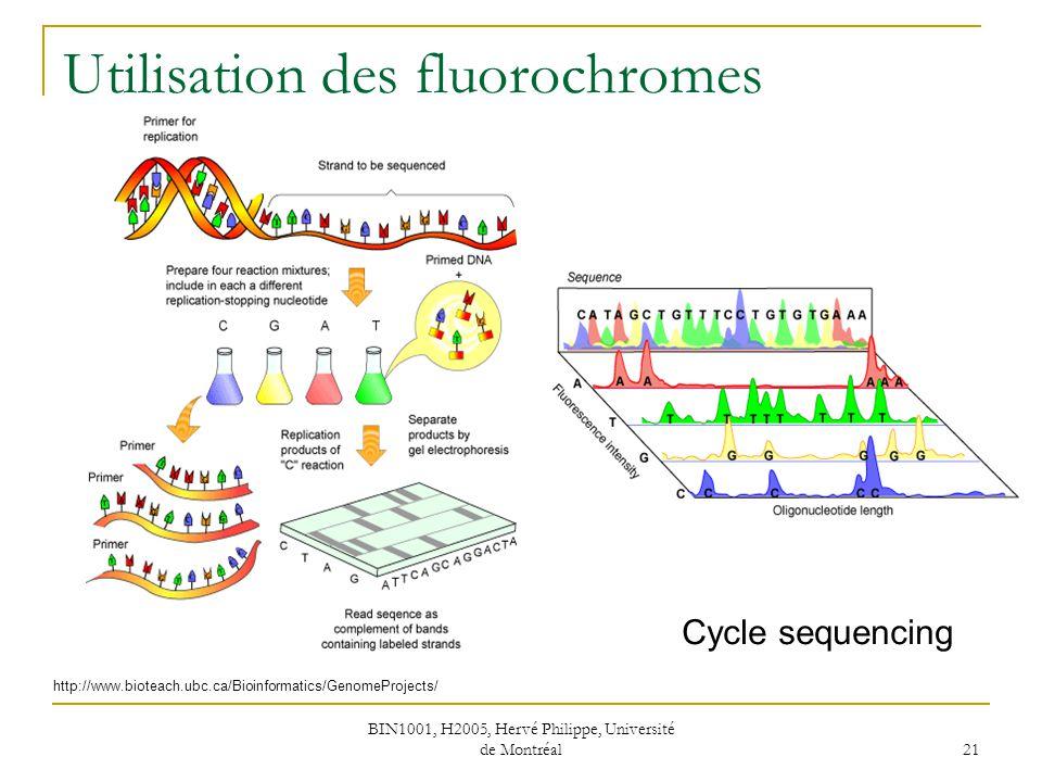 BIN1001, H2005, Hervé Philippe, Université de Montréal 21 Utilisation des fluorochromes http://www.bioteach.ubc.ca/Bioinformatics/GenomeProjects/ Cycl