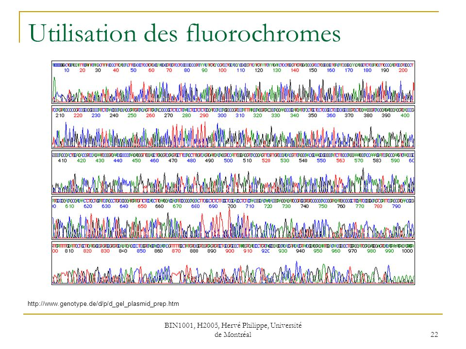 BIN1001, H2005, Hervé Philippe, Université de Montréal 23 Capillaires http://www.genomenewsnetwork.org/resources/whats_a_genome/Chp2_2.shtml http://www.aecom.yu.edu/cancer/new/cores/sequencing/abi3700.htm