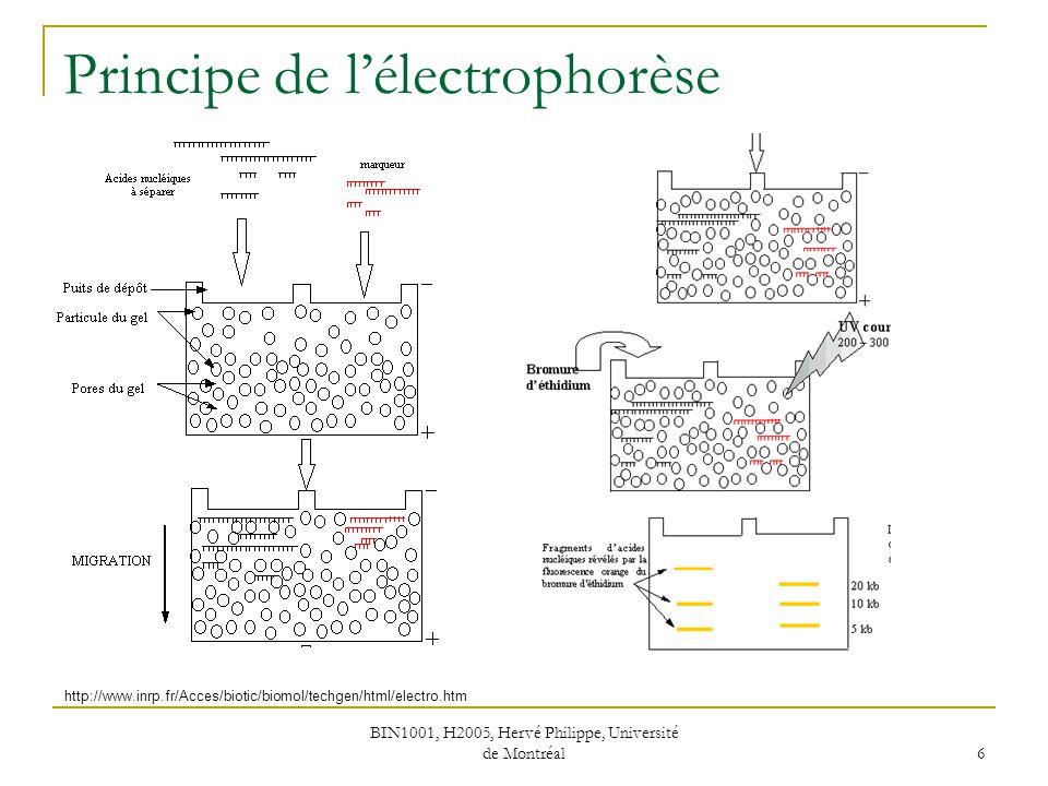 BIN1001, H2005, Hervé Philippe, Université de Montréal 6 Principe de lélectrophorèse http://www.inrp.fr/Acces/biotic/biomol/techgen/html/electro.htm