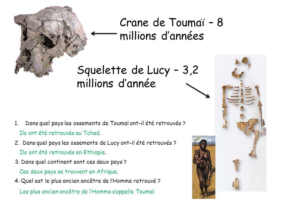 Crane de Toumaï – 8 millions dannées 1.Dans quel pays les ossements de Toumaï ont-il été retrouvés ? Squelette de Lucy – 3,2 millions dannée 2. Dans q