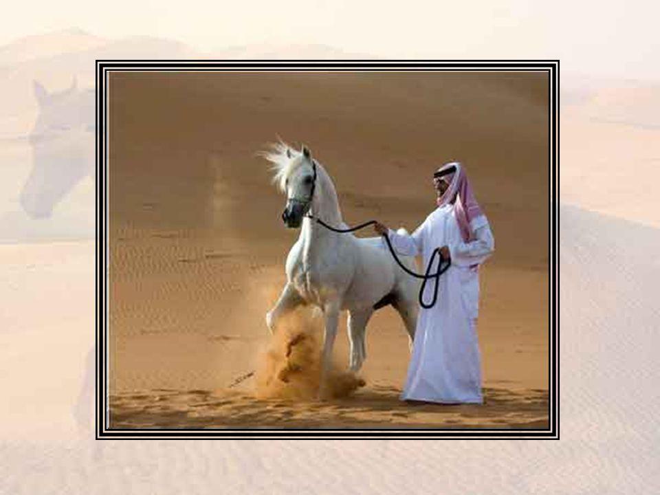 La plupart des Arabes de Syrie connaissaient bien Jane de réputation maintenant et l on avait discuté de ses dernières aventures amoureuses à travers camps et bazars; la nouvelle de son retour de Bagdad eut tôt fait d atteindre Medjuel dans le désert.