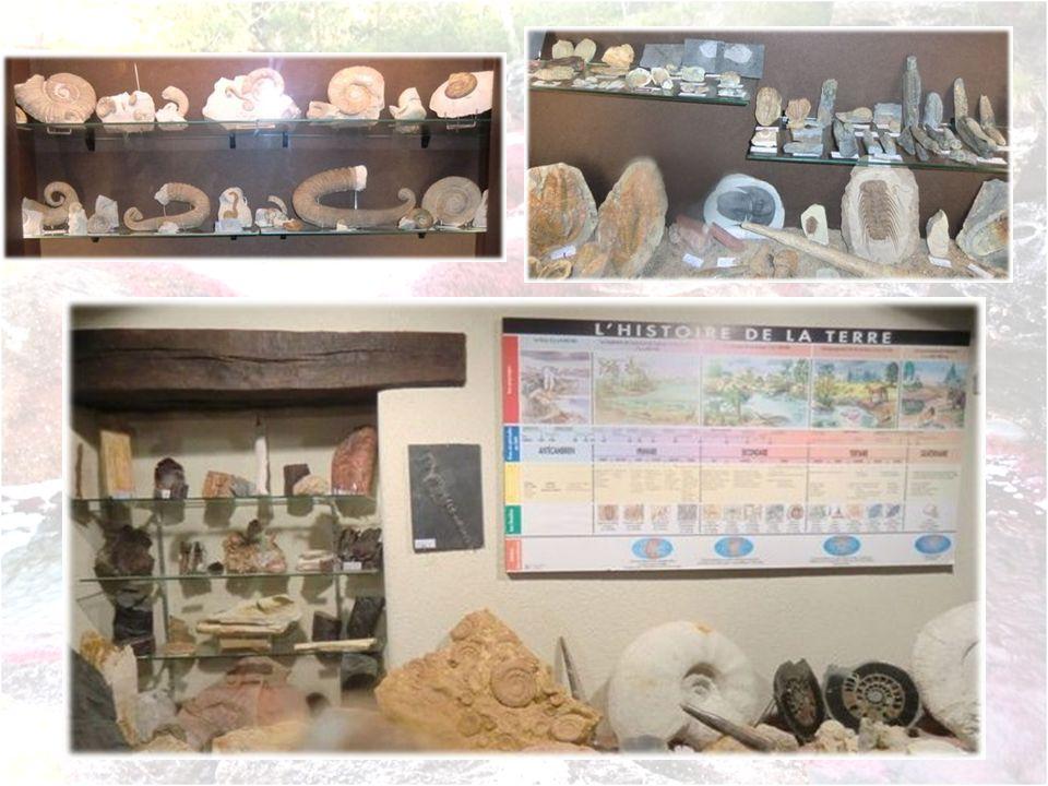 Ce musée des fossiles nétait pas prévu initialement au programme, mais son propriétaire, un grand passionné sest laissé convaincre par mon petit fils