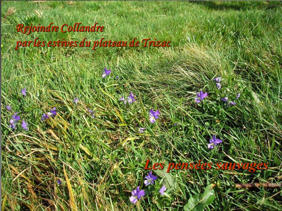 Les pensées sauvages Rejoindre Collandre par les estives du plateau de Trizac