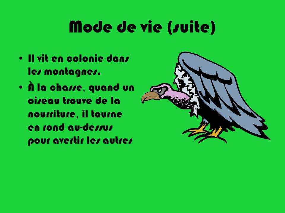 Mode de vie (suite) Il vit en colonie dans les montagnes. À la chasse, quand un oiseau trouve de la nourriture, il tourne en rond au-dessus pour avert