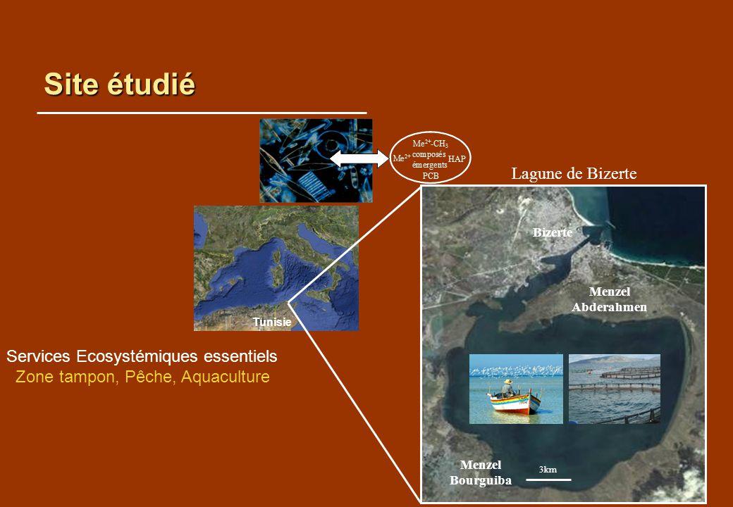 Site étudié Tunisie Lagune de Bizerte Services Ecosystémiques essentiels Zone tampon, Pêche, Aquaculture Menzel Abderahmen 3km Bizerte Menzel Bourguib