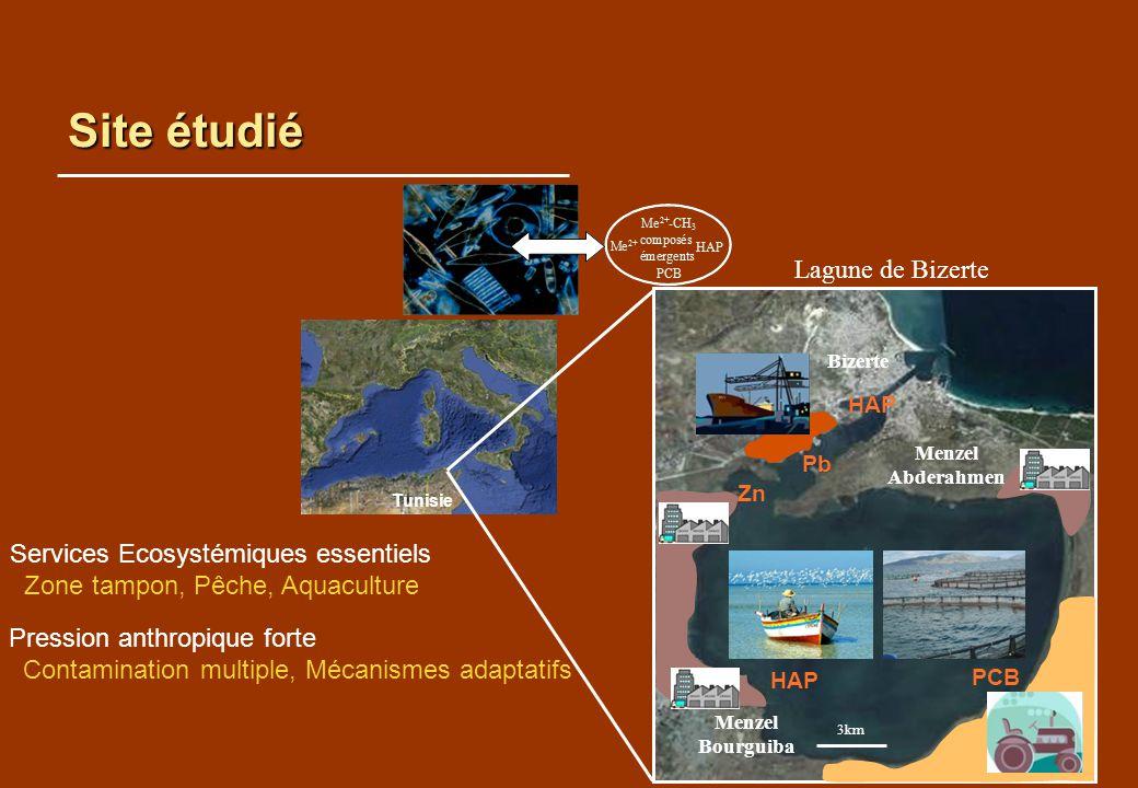 Site étudié Tunisie Lagune de Bizerte Services Ecosystémiques essentiels Zone tampon, Pêche, Aquaculture Pression anthropique forte Contamination mult