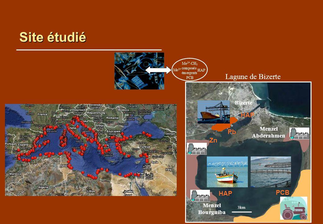 Site étudié Lagune de Bizerte Menzel Abderahmen 3km Zn HAP Pb HAP Bizerte Menzel Bourguiba PCB