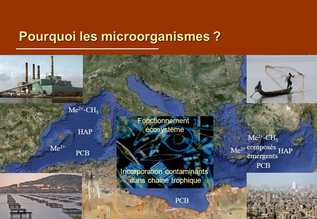 Pourquoi les microorganismes ? HAP Me 2+ PCB Me 2+ -CH 3 HAP Me 2+ PCB Me 2+ -CH 3 PCB Fonctionnement écosystème Incorporation contaminants dans chain