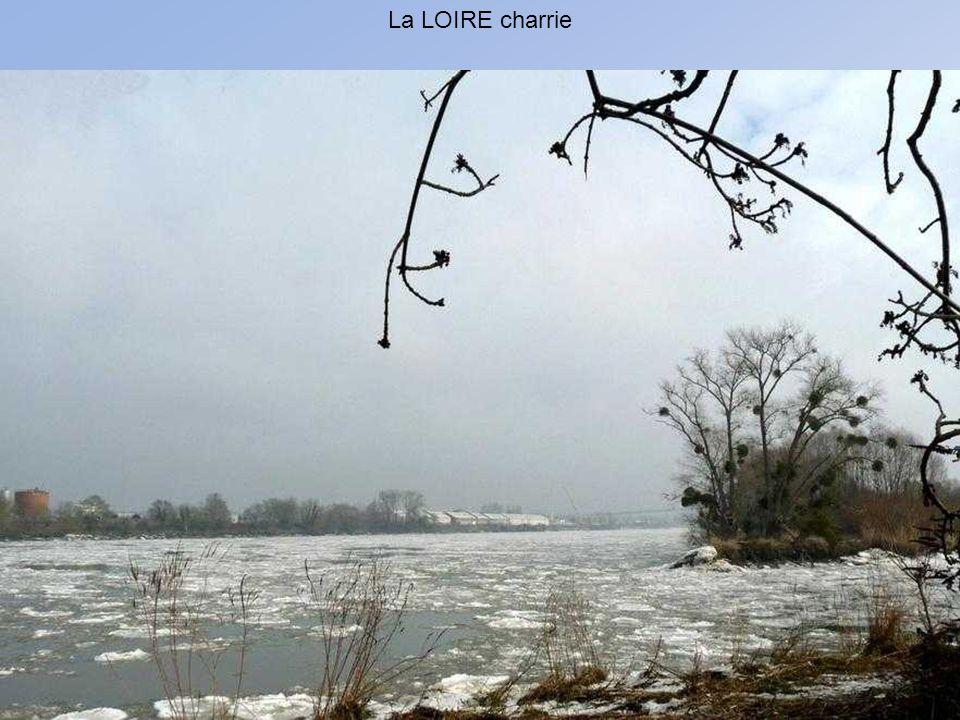 Sur les berges de la Loire en février