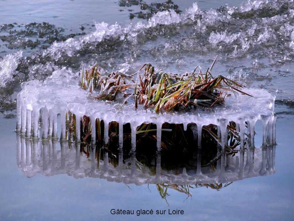 Nénuphars de glace sur la Loire à Orléans