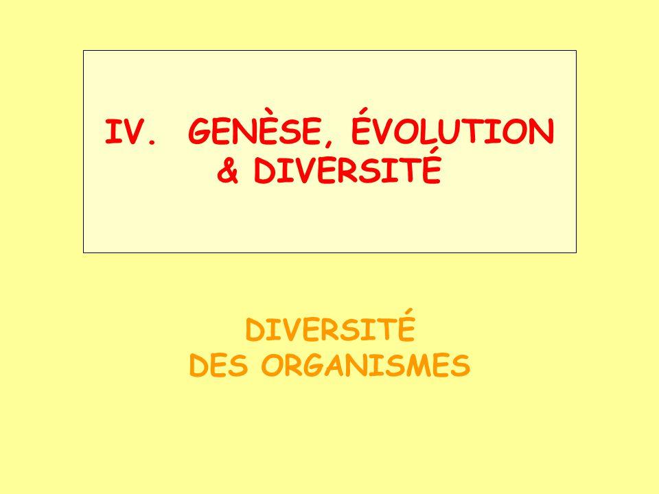 DIVERSITÉ DES ORGANISMES IV. GENÈSE, ÉVOLUTION & DIVERSITÉ