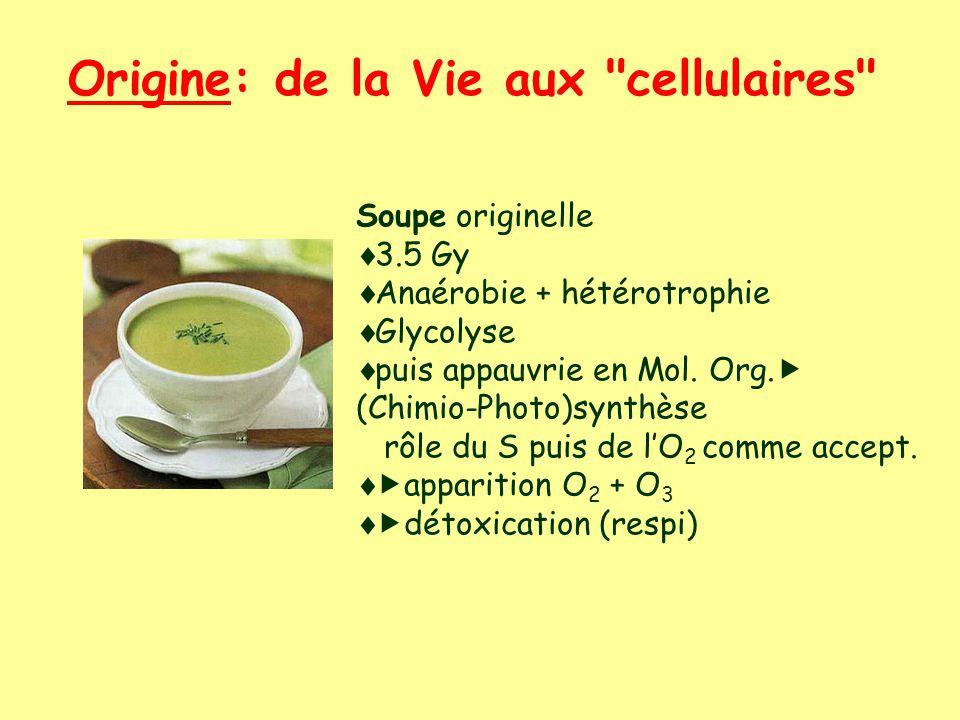 Origine: de la Vie aux cellulaires Soupe originelle 3.5 Gy Anaérobie + hétérotrophie Glycolyse puis appauvrie en Mol.