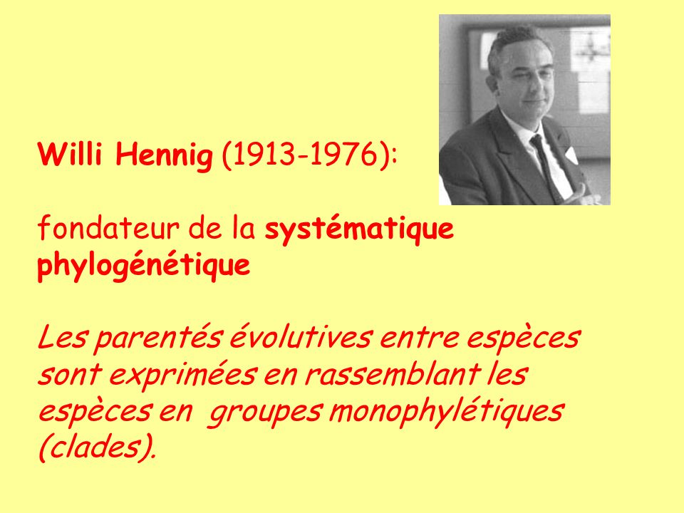 Willi Hennig (1913-1976): fondateur de la systématique phylogénétique Les parentés évolutives entre espèces sont exprimées en rassemblant les espèces en groupes monophylétiques (clades).