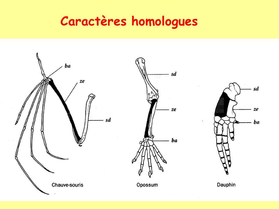 Caractères homologues