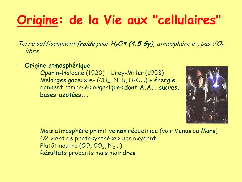Origine: de la Vie aux cellulaires Terre suffisamment froide pour H 2 O (4.5 Gy), atmosphère e-, pas dO 2 libre Origine atmosphérique Oparin-Haldane (1920) – Urey-Miller (1953) Mélanges gazeux e- (CH 4, NH 3, H 2 O...) + énergie donnent composés organiques dont A.A., sucres, bases azotées...