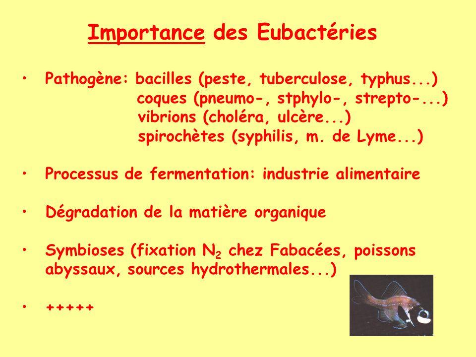 Importance des Eubactéries Pathogène: bacilles (peste, tuberculose, typhus...) coques (pneumo-, stphylo-, strepto-...) vibrions (choléra, ulcère...) spirochètes (syphilis, m.