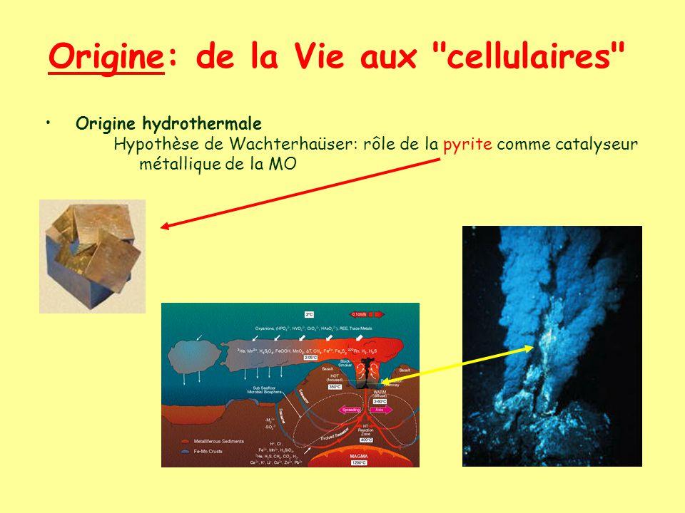 Origine: de la Vie aux cellulaires Origine hydrothermale Hypothèse de Wachterhaüser: rôle de la pyrite comme catalyseur métallique de la MO