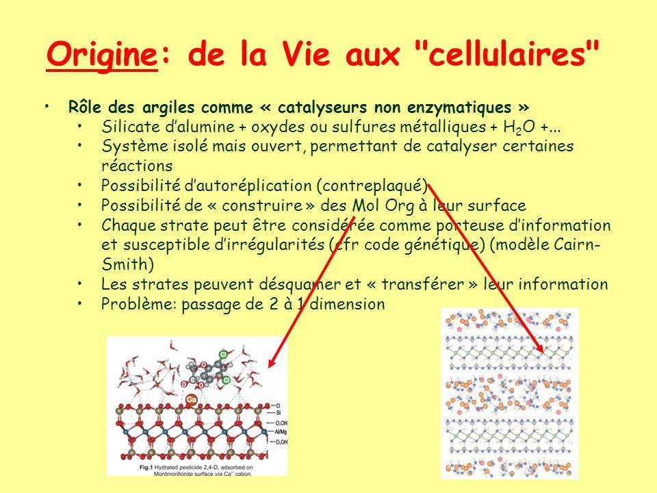 Origine: de la Vie aux cellulaires Rôle des argiles comme « catalyseurs non enzymatiques » Silicate dalumine + oxydes ou sulfures métalliques + H 2 O +...
