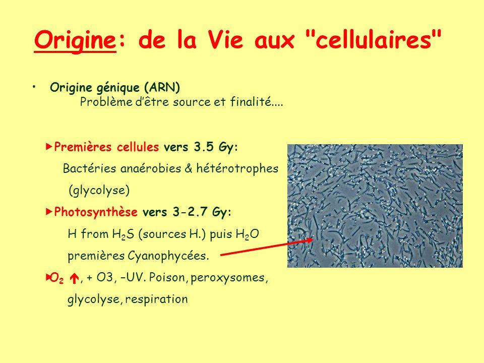 Origine: de la Vie aux cellulaires Origine génique (ARN) Problème dêtre source et finalité....