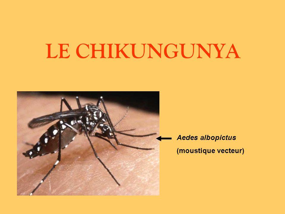 LE CHIKUNGUNYA Quest-ce que le chikungunya .Quels sont les symptômes .