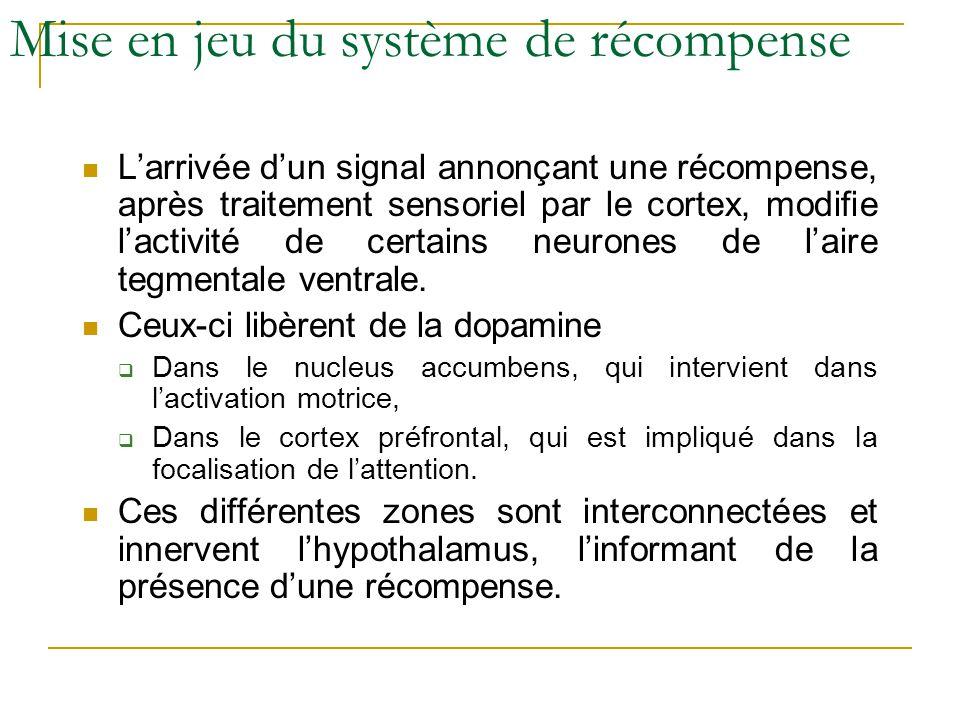 Mise en jeu du système de récompense Larrivée dun signal annonçant une récompense, après traitement sensoriel par le cortex, modifie lactivité de cert