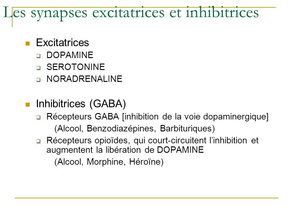 Les synapses excitatrices et inhibitrices Excitatrices DOPAMINE SEROTONINE NORADRENALINE Inhibitrices (GABA) Récepteurs GABA [inhibition de la voie do