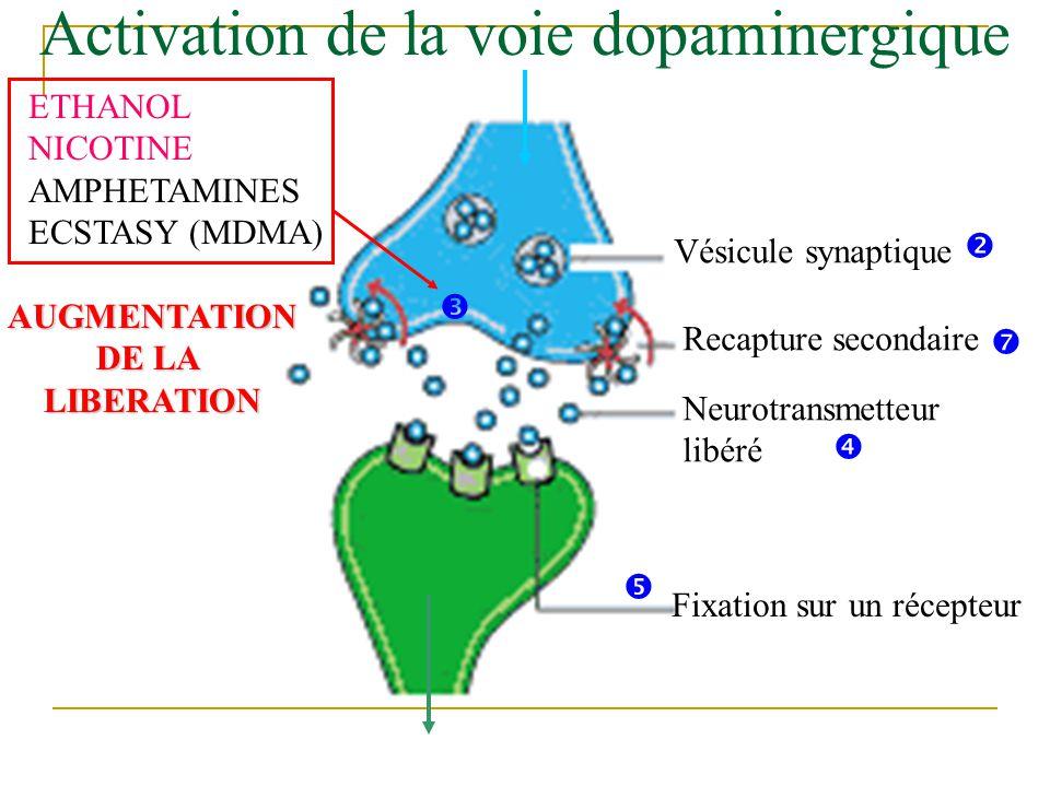 Vésicule synaptique Neurotransmetteur libéré Fixation sur un récepteur Recapture secondaire ETHANOL NICOTINE AMPHETAMINES ECSTASY (MDMA) AUGMENTATION