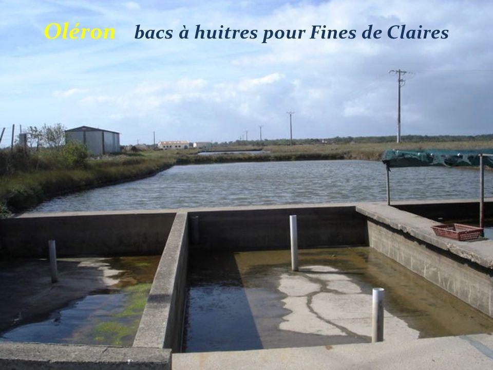 Le Grand-Village-Plage Port des Salines Pêche au carrelet