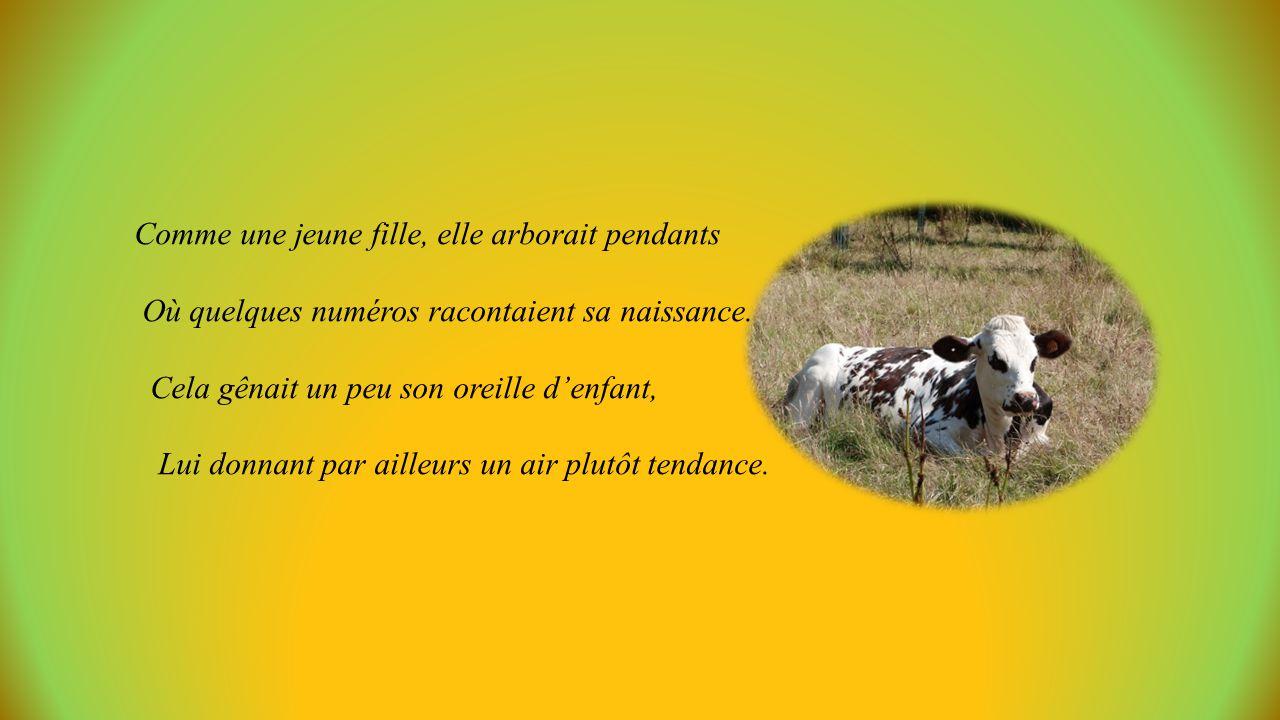 La petite vache Normande Un texte de Simone Robert, mis en images par Jackdidier