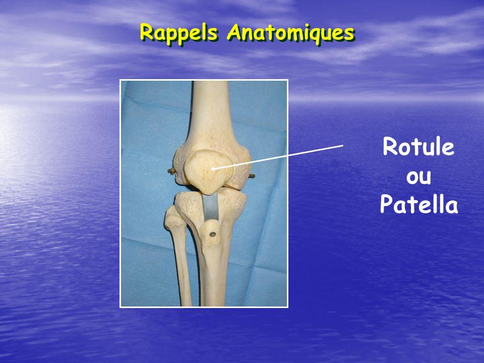 Rotule ou Patella