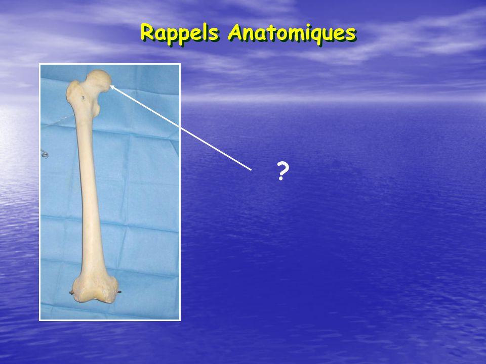 Rotule ou Patella Tibia Péroné ou Fibula Tête du péroné