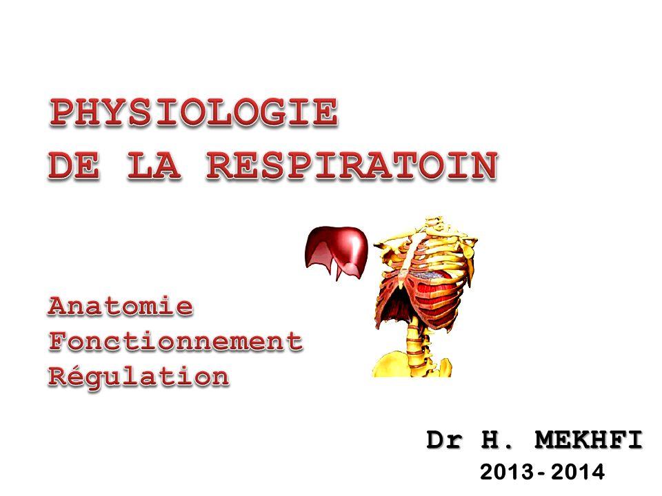 52 RAPPORT VENTILATION - PERFUSION Hétérogénéité rapport : dépend de la Hauteur du poumon (gravité) Gravité et Distribution de la Ventilation Alvéolaire .
