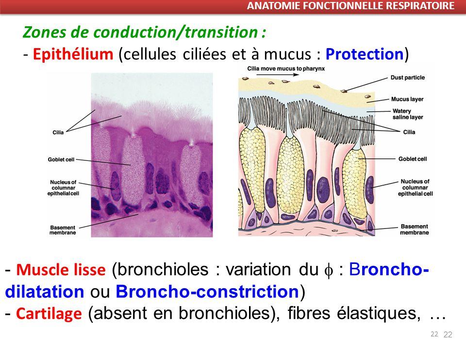 22 Zones de conduction/transition : - Epithélium (cellules ciliées et à mucus : Protection) 22 - Muscle lisse (bronchioles : variation du : Broncho- dilatation ou Broncho-constriction) - Cartilage (absent en bronchioles), fibres élastiques, … ANATOMIE FONCTIONNELLE RESPIRATOIRE