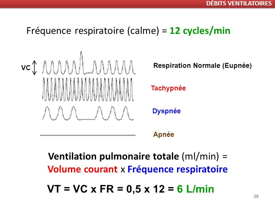 28 Respiration Normale (Eupnée) VC Ventilation pulmonaire totale (ml/min) = Volume courant x Fréquence respiratoire Fréquence respiratoire (calme) = 12 cycles/min Respiration périodique Tachypnée Dyspnée 28 VT = VC x FR = 0,5 x 12 = 6 L/min Apnée DÉBITS VENTILATOIRES