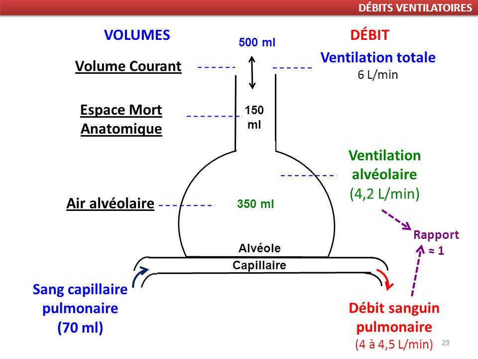 29 Sang capillaire pulmonaire (70 ml) Ventilation totale 6 L/min Débit sanguin pulmonaire (4 à 4,5 L/min) Ventilation alvéolaire (4,2 L/min) DÉBITVOLUMES Rapport 1 Espace Mort Anatomique 150 ml Volume Courant 500 ml Air alvéolaire 350 ml DÉBITS VENTILATOIRES Alvéole Capillaire
