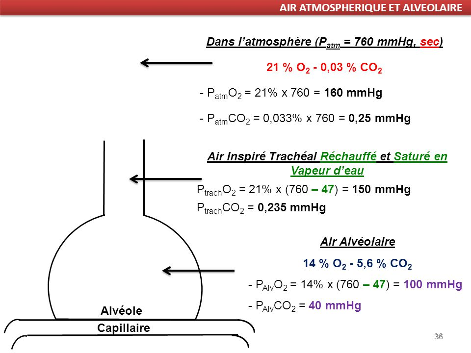 36 Dans latmosphère (P atm = 760 mmHg, sec) 21 % O 2 - 0,03 % CO 2 - P atm O 2 = 21% x 760 = 160 mmHg - P atm CO 2 = 0,033% x 760 = 0,25 mmHg Air Inspiré Trachéal Réchauffé et Saturé en Vapeur deau P trach O 2 = 21% x (760 – 47) = 150 mmHg P trach CO 2 = 0,235 mmHg Air Alvéolaire 14 % O 2 - 5,6 % CO 2 - P Alv O 2 = 14% x (760 – 47) = 100 mmHg - P Alv CO 2 = 40 mmHg 36 Alvéole Capillaire AIR ATMOSPHERIQUE ET ALVEOLAIRE